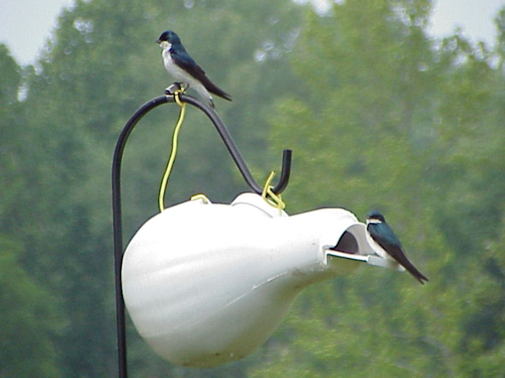 how to keep swallows from nesting on your house
